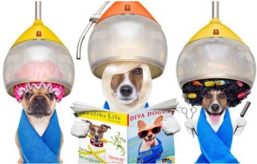 Swap Natural Greatness Ownat Mascotas Reva, visita nuestra peluquería canina como estos graciosos perritos