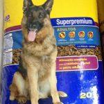 Superpremium alta calidad