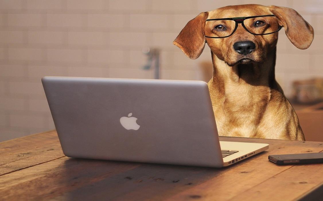 Swap, Natural Greatness, Ownat, perro con gafas consultando toda nuestra gama de accesorios en el portátil