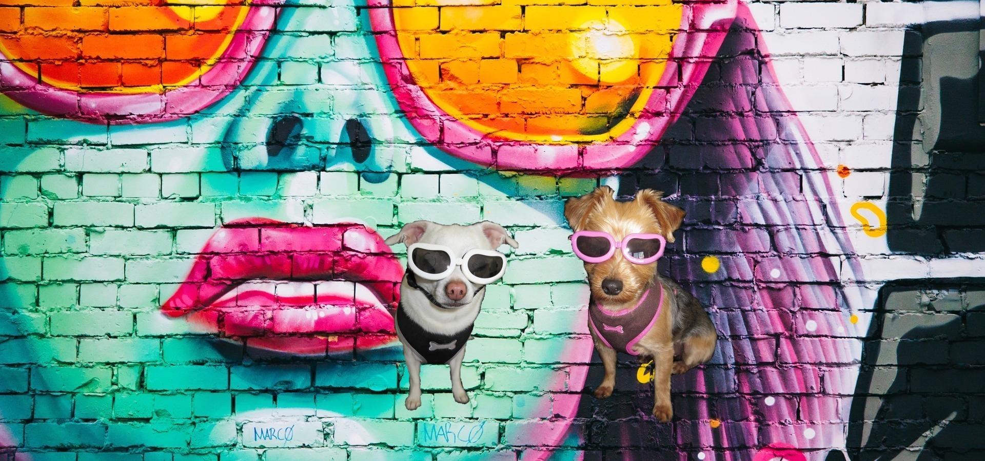 Mascotas Reva, perritos con accesorios sobre un graffiti